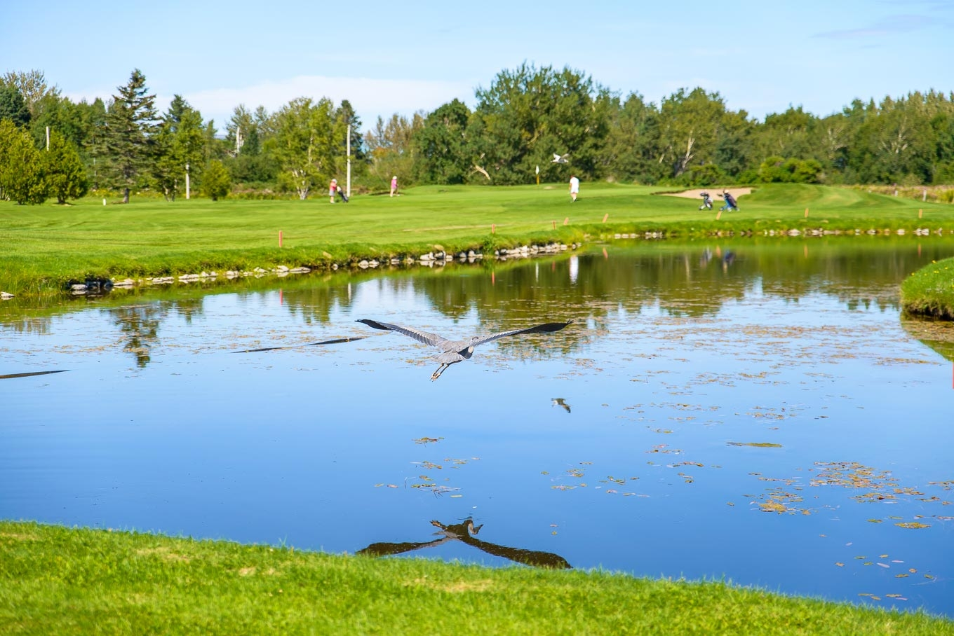 Golf-Sainte-Anne-des-Monts_350_web